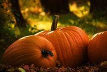 ~•Feels Like Fall•~ / Autumn / by Lisa Knight