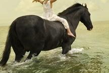 I <3 Horses / by Tarah Statham