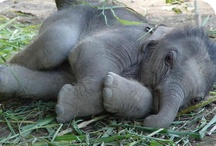 Cuuuute - baby animals