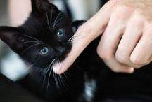 Le Chat Noir / by kat DeBlois