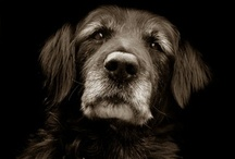 ~•Dogs & Why We ❤ Them•~ / by Lisa Knight