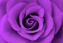 ~•All Things Purple•~ / by Lisa Knight