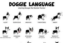 Doggie Style / Active pooches are the best companions!