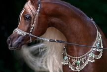 Arabian tack / Costumes, halters & presentation sets. Inspiring photos!
