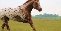 Pferde für Sport und Hobby