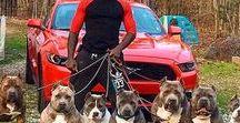 Hunde zum Schutz und Hobby