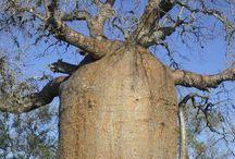 木    prant