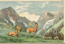 alpine aesthetics