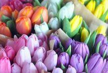 Easter/Spring / by Lindsey Guevara