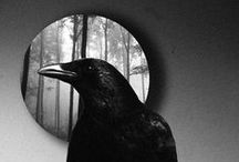 """Quote The Raven..... / But the raven, sitting lonely on the placid bust, spoke only  That one word, as if his soul in that one word he did outpour.  Nothing further then he uttered- not a feather then he fluttered -  Till I scarcely more than muttered, """"other friends have flown before -  On the morrow he will leave me, as my hopes have flown before.""""  Then the bird said, """"Nevermore.""""   Edgar Allen Poe"""