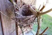 Birds Nests and Houses