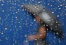 Rain / by Rakefet Lerer