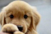 *Sweet dogs*