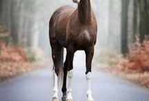 horses...
