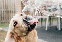 Fotos para caninos / Para caninos