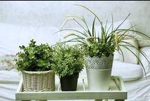 plantes sommeil