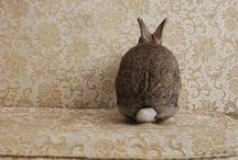 animals / by Ginny Winston