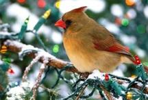 birds  / by Sharon Stokes