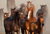horses / by Sharon Stokes