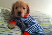 Makes Me Smile: Puppies in Jammies / LOL... Who knew this was a 'thing'?? :D