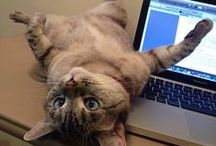 Cats on keyboards / For anyone who has to deal with feline interruptions when they're trying to write.
