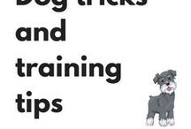 Dog tricks and training tips / Tricks and training articles for the dog loving community