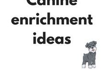 Canine Enrichment ideas / Brain game ideas for dogs, mental stimulation for dogs and canine enrichment ideas.