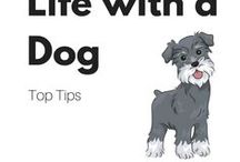 Life with a dog - top tips / Puppy tips, dog grooming, dog nutrition, dog care, dog health and more