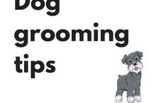 Dog grooming tips / Dog grooming tips to help keep your dog happy and healthy