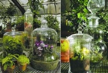 Succulents, terrariums and the like / by Jaynie Richards