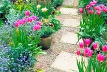 Garden Projects / by Kim Grace