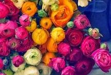 Flowers / Beautiful flowers for inspiration and appreciation.  / by Taylor Desens