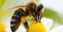 Bees and Beecraft