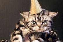 Party Ideas for Cats