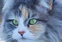 Cute Cats / Cute cat pictures