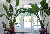 Large indoor plant ideas