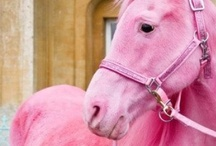 A Horse of a Different Color / Color inspirations