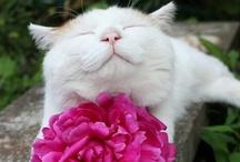 Here Kitty Kitty / I just love cats!