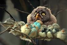 Owl!!!