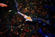 Aquaponics / by Jamie Boyles