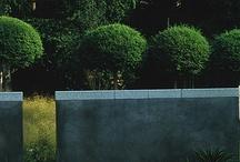garden / by Evija Dindone