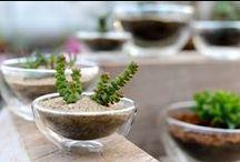 Container Gardening Inspiration