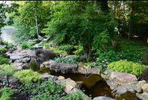 Frisella Nursery Landscapes
