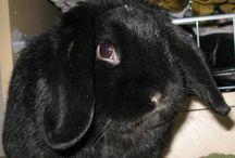 Bunnies {#} <3