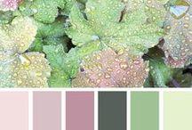Color Palette / Color combinations