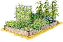 Garden / by Sarah Kathleen