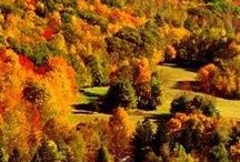 AUTUMN / Season of Autumn