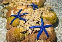 Ocean life / Things of the ocean