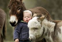 D as in donkey