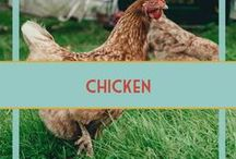 Chicken & Poultry Recipes